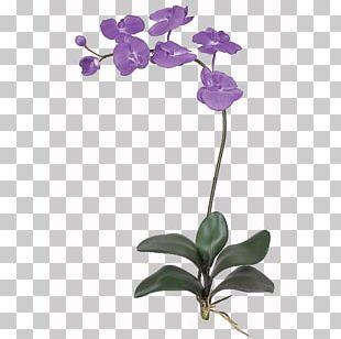 Flower Orchids Petal Plant Stem PNG