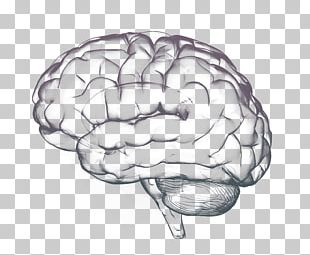 Thought Human Brain Cognition Science PNG