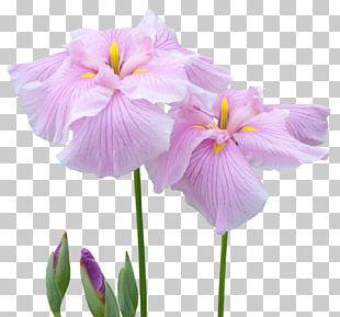 Irises Cut Flowers Garden Roses PNG