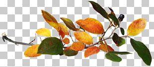 Autumn Leaves Leaf PNG