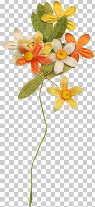 Floral Design Petal Spring Plant Stem Flowering Plant PNG