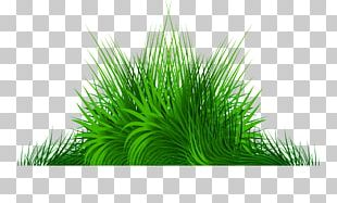 Hand Painted Green Grass PNG
