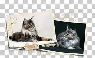 Maine Coon Norwegian Forest Cat Whiskers Kitten Dog Breed PNG