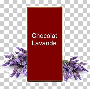 Lavender Oil Essential Oil English Lavender Aromatherapy PNG