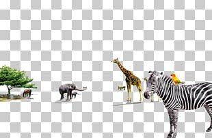 Quagga Giraffe Zebra Animal PNG