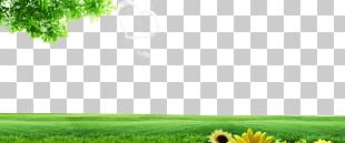 Lawn Energy Grassland Nature PNG