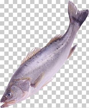 Fish Clipping Path PNG