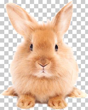Dog Cat Rabbit Pet Dictionary PNG