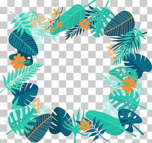 Tropics Euclidean PNG