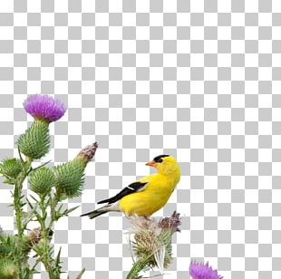 Flying Birds PNG Images, Flying Birds Clipart Free Download