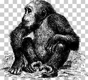 Common Chimpanzee Gorilla Monkey Ape Orangutan PNG