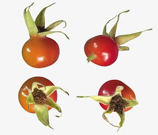 Red Rose Hips PNG
