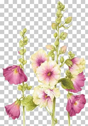 Watercolor: Flowers Flower Painting Watercolor Painting Botanical Illustration PNG