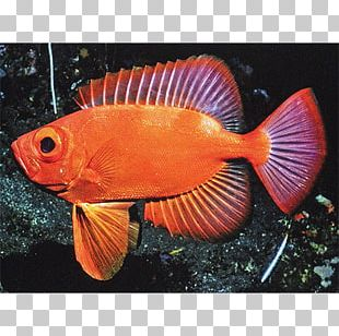 Aquariums Marine Biology Coral Reef Fish Fauna PNG