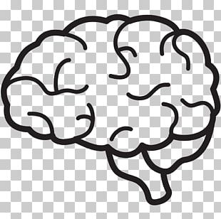 Human Brain Free Content PNG
