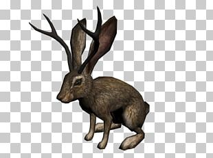 Red Dead Redemption: Undead Nightmare Jackalope Able Content Video Game Wikia PNG