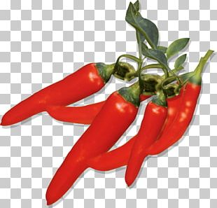 Capsicum Annuum Chili Pepper Fruit PNG