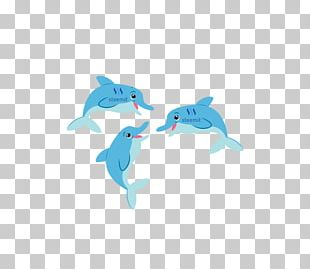 Common Bottlenose Dolphin Steemit Whales Marine Biology PNG