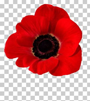 Blood Swept Lands And Seas Of Red Common Poppy Opium Poppy In Flanders Fields PNG