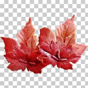 Petal Leaf Flower PNG