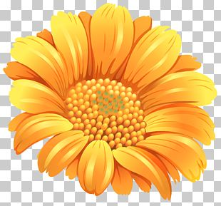 Flower Orange PNG