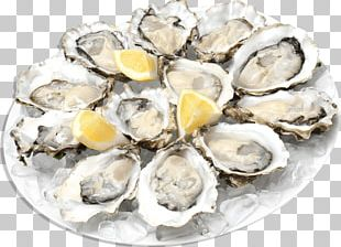 Oysters PNG