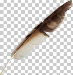 Feather Bird Quill Pen PNG