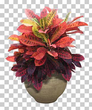 Houseplant Flower Tree PNG