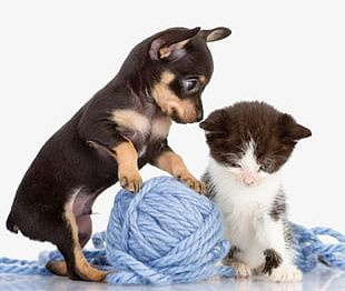 Play Ball Of Puppies And Kittens PNG