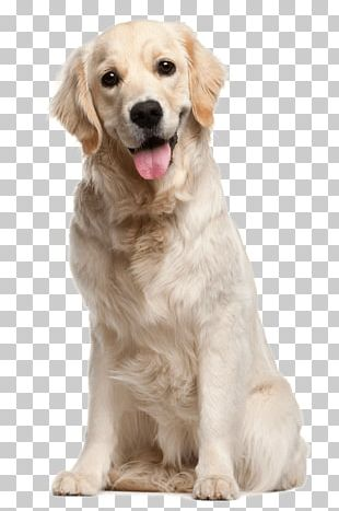 Dog Grooming Puppy Cat Pet PNG