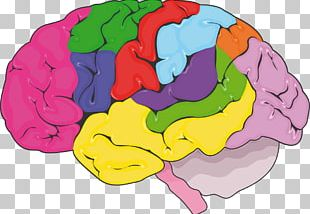 Brain Nervous System Human Body Servier Medical Aneurysm PNG