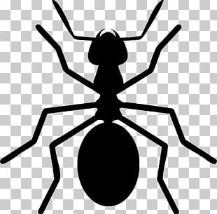 Ant Insect License PNG