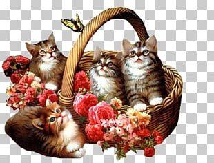 Kitten Flower Blue Rose Animation PNG