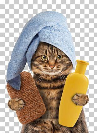 Cat Towel Kitten Pet Polyester PNG