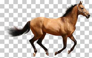Horse Desktop PNG