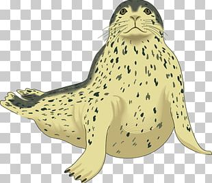 Earless Seal Sea Lion Harp Seal Leopard Seal PNG