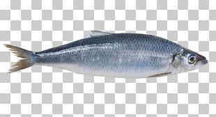 Sardine Norway Atlantic Herring Mackerel PNG