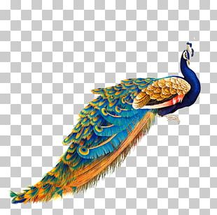 Bird Peafowl Painting PNG