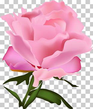 Garden Roses Cabbage Rose Floribunda Carnation Cut Flowers PNG