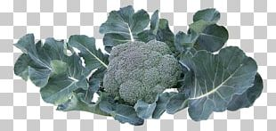 Broccoli Collard Greens Vegetable PNG
