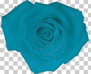 Blue Rose Turquoise Blue Rose Aqua PNG