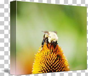 Honey Bee Bumblebee Nectar Pollen PNG