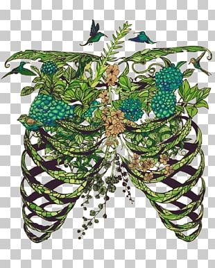 Lung Drawing Art Anatomy Rib Cage PNG