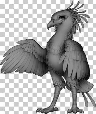Chicken Bird Of Prey Beak Secretarybird PNG