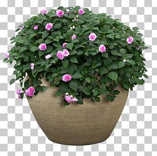 Flowerpot Flower Garden Shrub PNG