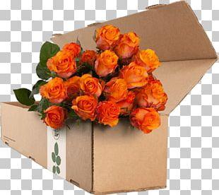Garden Roses Flower Orange Blue Rose PNG