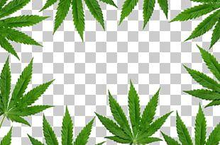 New York Cannabis Shutterstock PNG