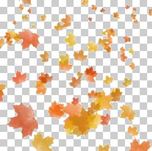 Portable Network Graphics Autumn Leaf Color Autumn Leaf Color PNG