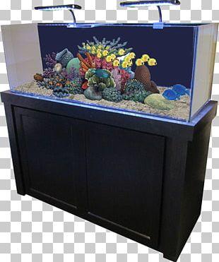 Reef Aquarium Gallon Aquarium Filters Aquariums PNG