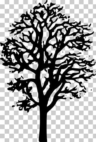 Japanese Maple Tree PNG